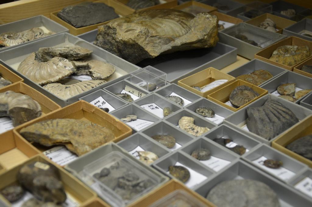 Blick in die Sammlung