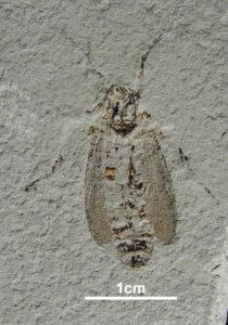 Fossile Insekten @ GSUB Raum 0180 | Bremen | Bremen | Deutschland