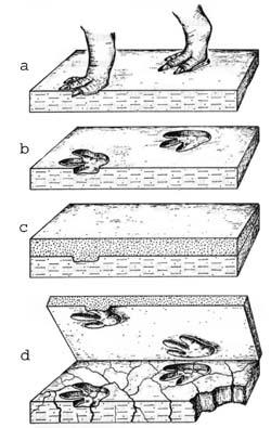Entstehung von Fährtenplatten