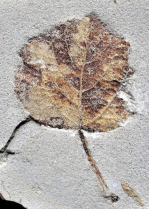 Das Pliozän von Willershausen - kehrt ein Ökosystem zurück? @ GSUB Raum 0180 | Bremen | Bremen | Deutschland