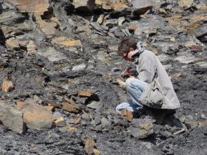 ABSAGE WEGEN CORONA-VIRUS! Der Piesberg bei Osnabrück und seine Fossilien @ GSUB Raum 0180 | Bremen | Bremen | Deutschland