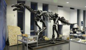 Flussauen aus der Zeit der Dinosaurier – die Wealden-Fazies # Youtube-Livestream @ Youtube-Livestream | Bremen | Bremen | Deutschland
