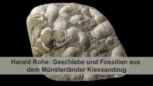 Geschiebe und Fossilien aus dem Münsterländer Kiessandzug # Youtube-Livestream @ Youtube-Livestream | Bremen | Bremen | Deutschland