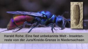 Eine fast unbekannte Welt - Insektenreste von der Jura/Kreide-Grenze in Niedersachsen # Youtube-Livestream @ Youtube-Livestream | Bremen | Bremen | Deutschland